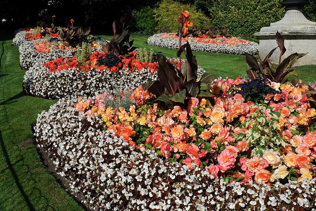 victoria-park-flowers