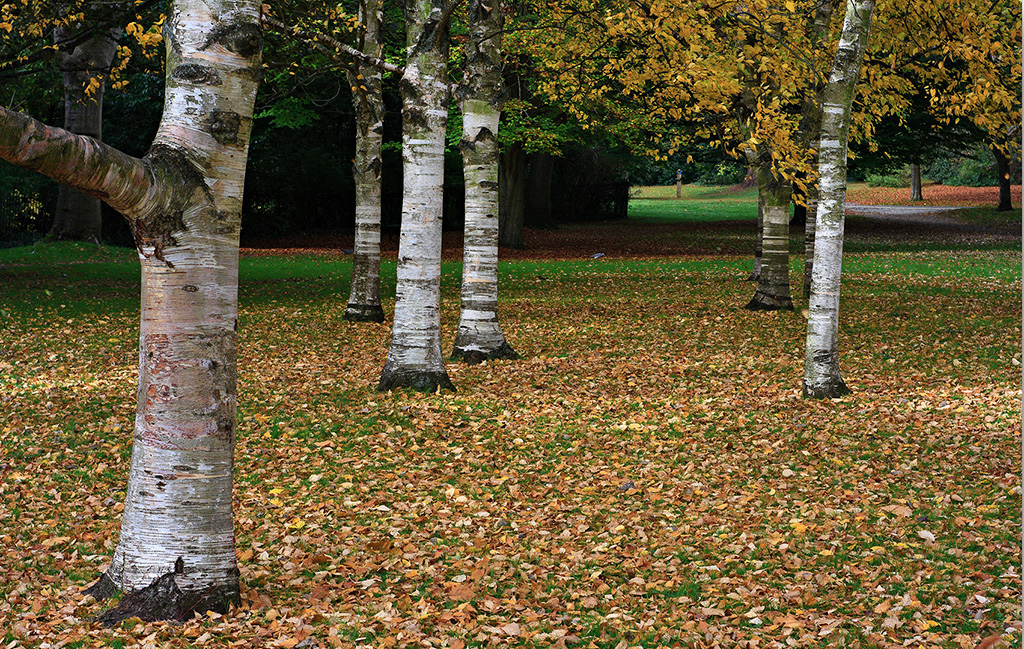 victoria-park-trees