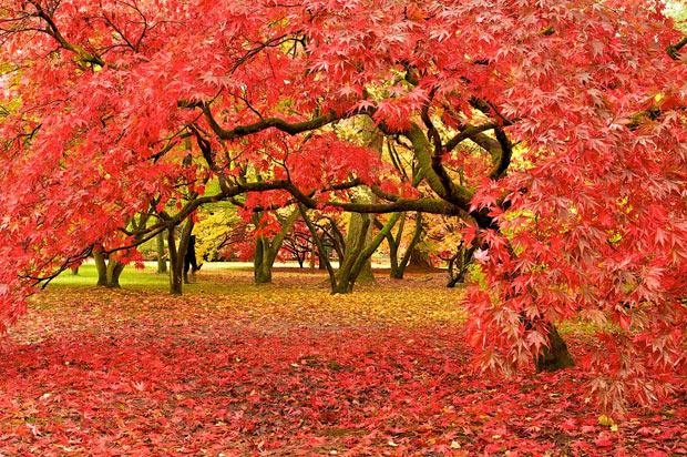 Westonbirt Arboretum Bath Uk Tourism Accommodation