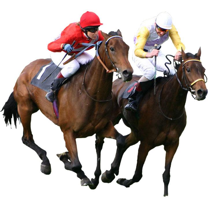 Bath Racecourse Horse Racing