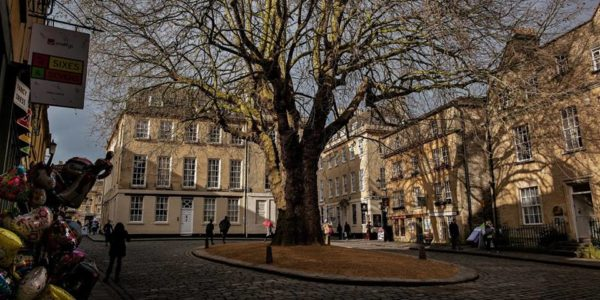 Iconic Buildings & Views of Bath Series – The Plane Tree